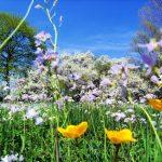 Anticipo di primavera